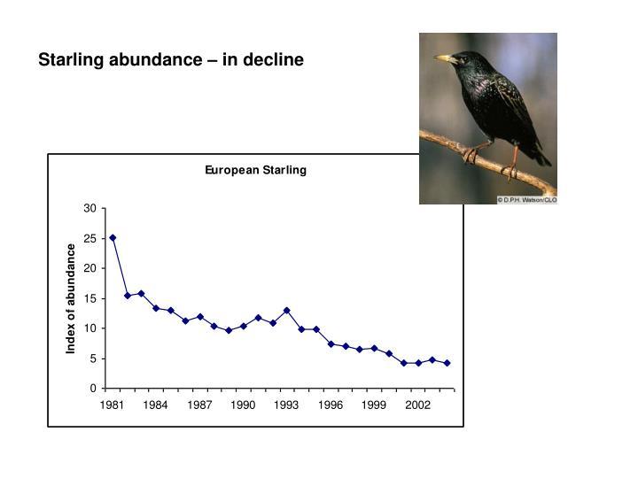 Starling abundance – in decline