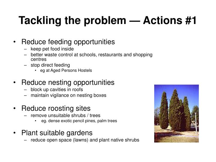 Tackling the problem — Actions #1