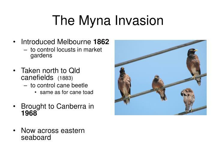 The Myna Invasion