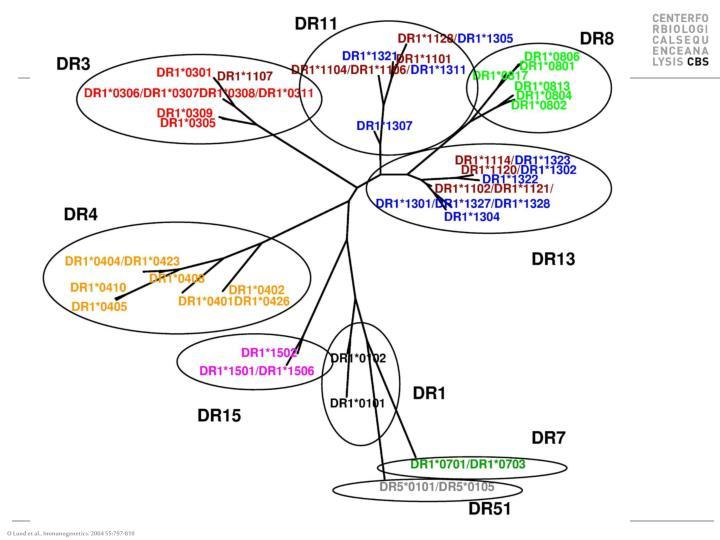 O Lund et al., Immunogenetics. 2004 55:797-810