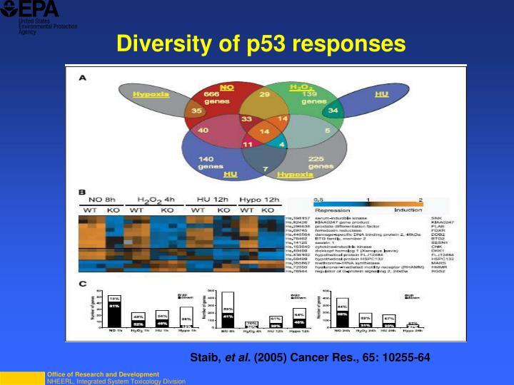 Diversity of p53 responses
