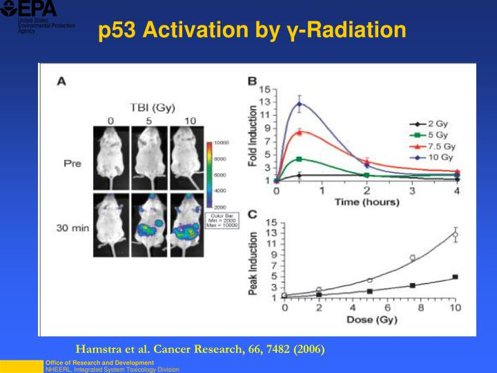 p53 Activation by