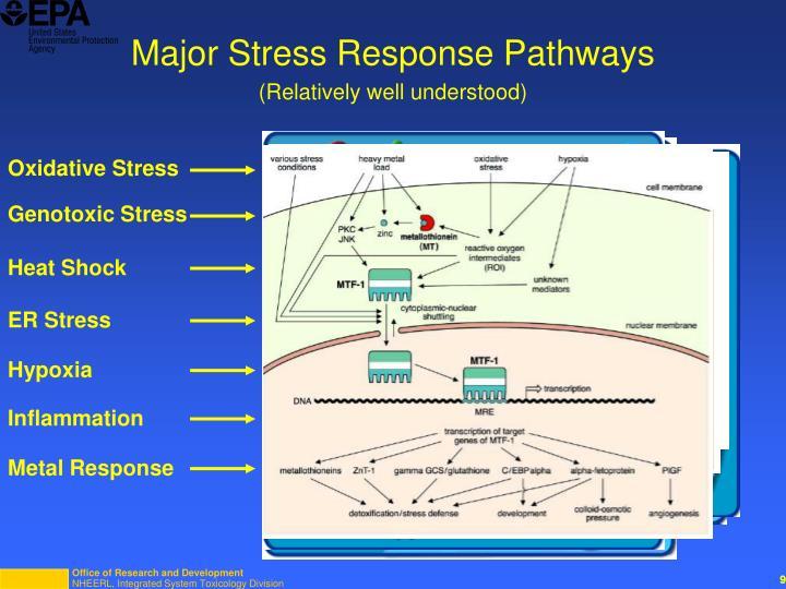 Major Stress Response Pathways