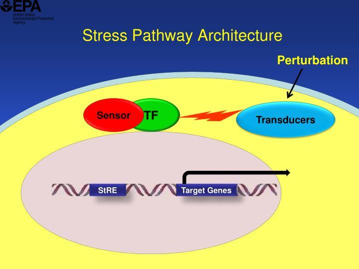 Stress Pathway Architecture