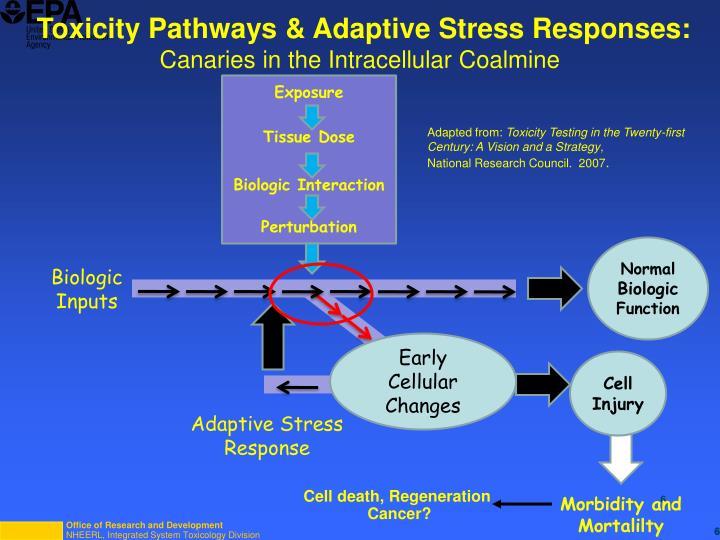 Toxicity Pathways & Adaptive Stress Responses: