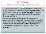 incoming receiving sensory information