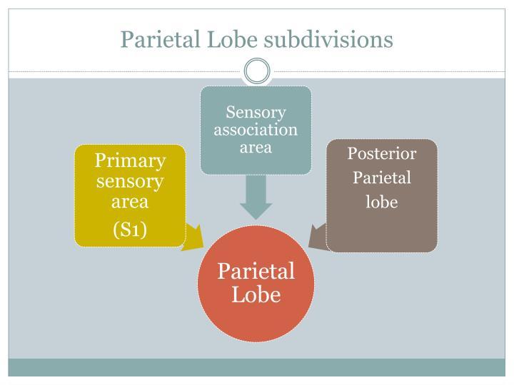 Parietal Lobe subdivisions