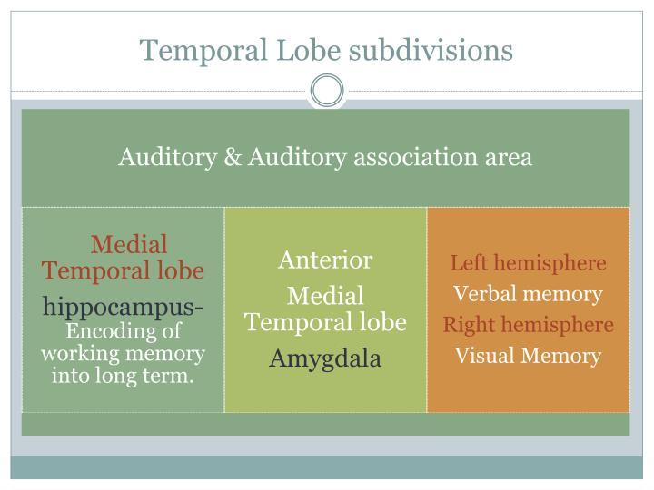 Temporal Lobe subdivisions