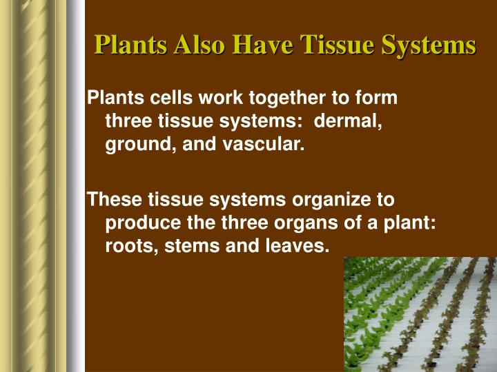 Plants Also Have Tissue Systems