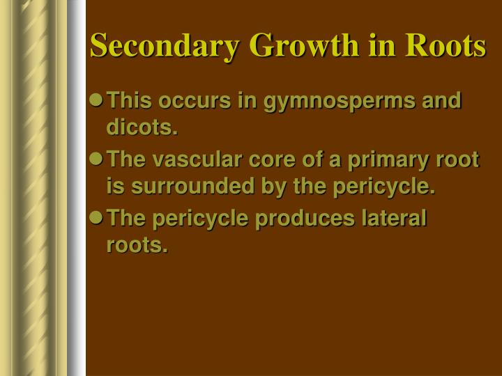 Secondary Growth in Roots