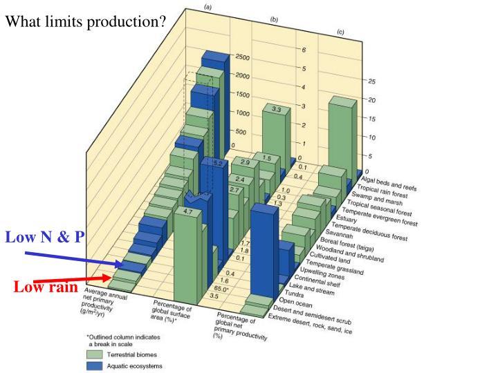 What limits production?