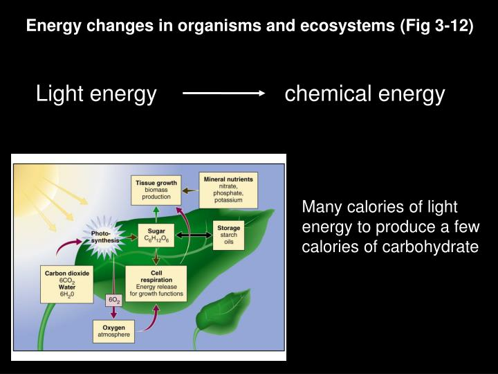 Energy changes in organisms and ecosystems (Fig 3-12)