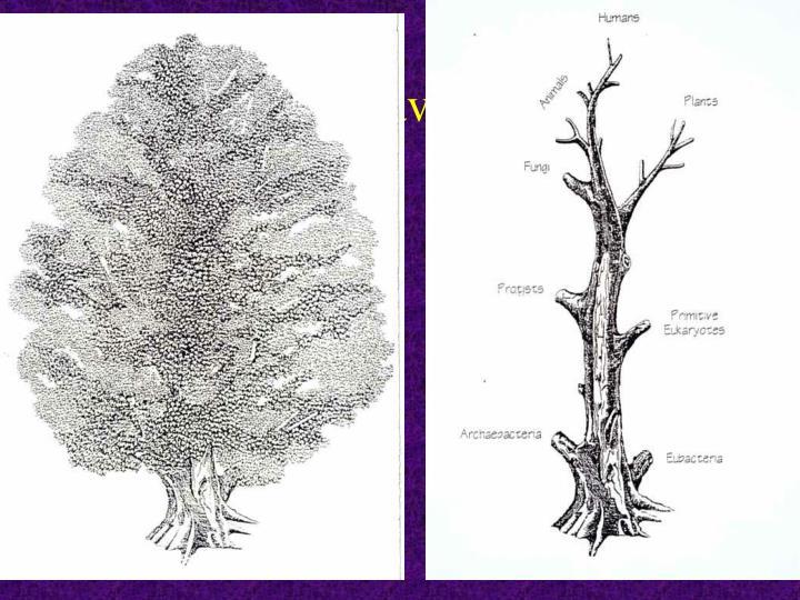 Tree – leaves/trunk