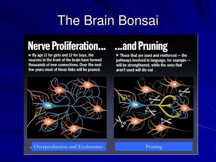 The Brain Bonsai
