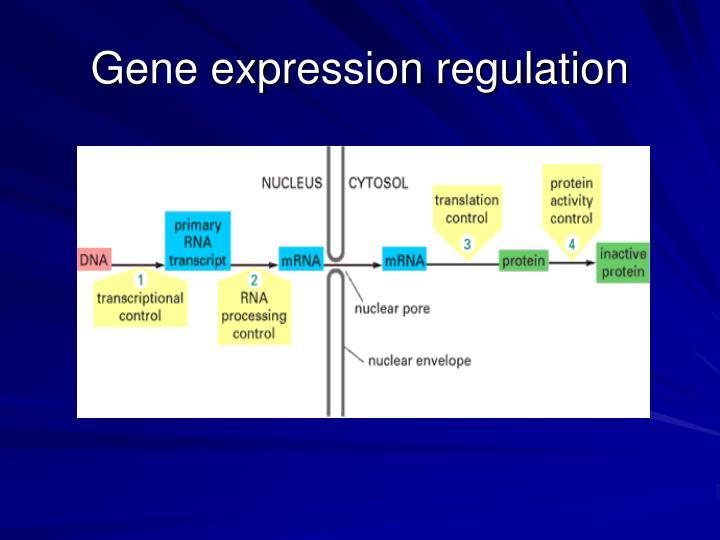Gene expression regulation