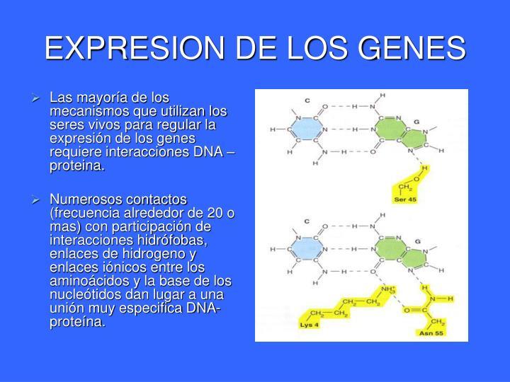 EXPRESION DE LOS GENES