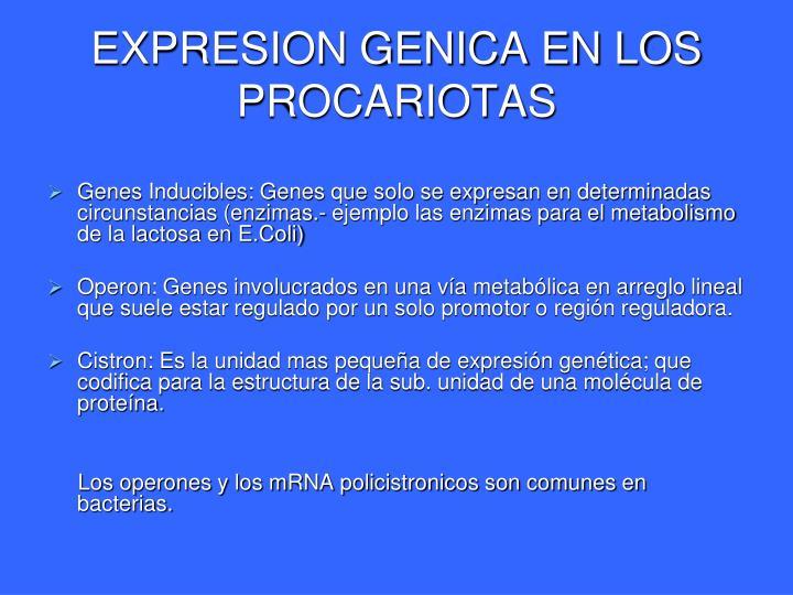 EXPRESION GENICA EN LOS PROCARIOTAS