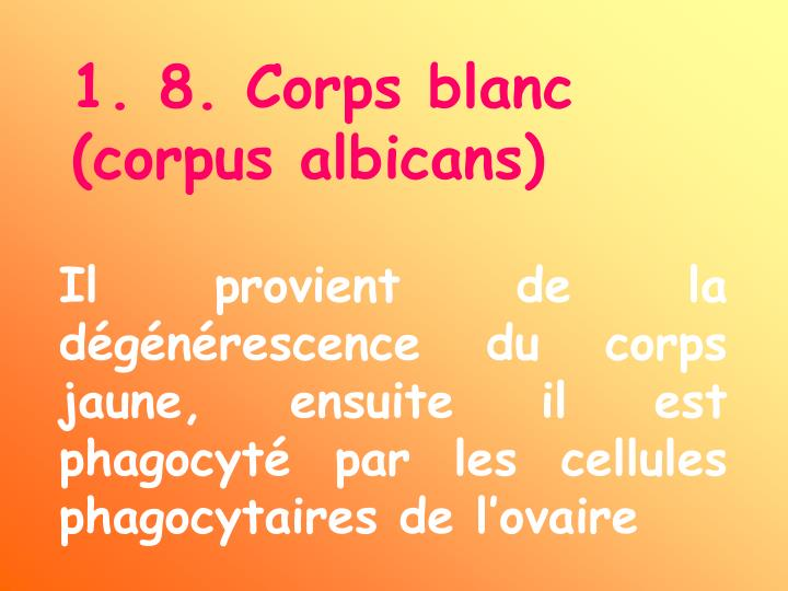 1. 8. Corps blanc (corpus albicans)