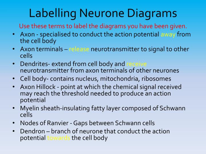 Labelling Neurone Diagrams