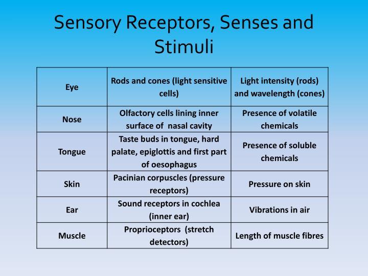 Sensory Receptors, Senses and Stimuli