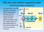 why do multi cellular organisms need communication systems3