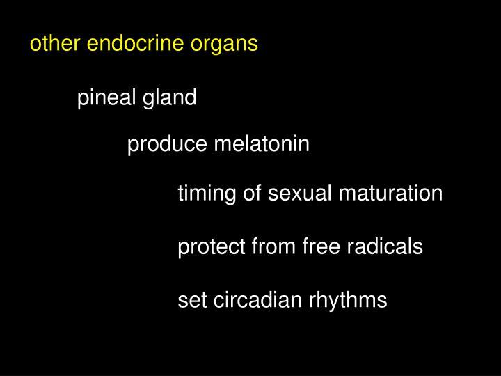 other endocrine organs