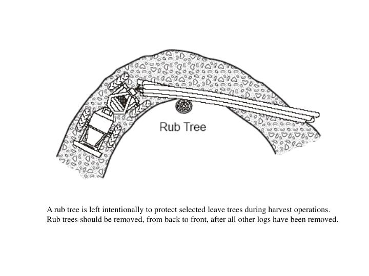 A rub tree is left intentionally to protect selected leave trees during harvest operations.