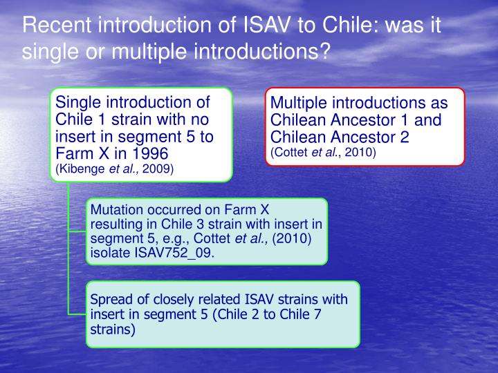Recent introduction of ISAV to Chile: was it single or multiple introductions?