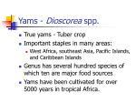 yams dioscorea spp