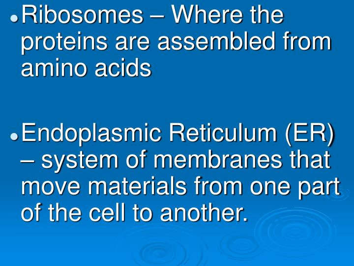 Ribosomes – Where the proteins are assembled from amino acids