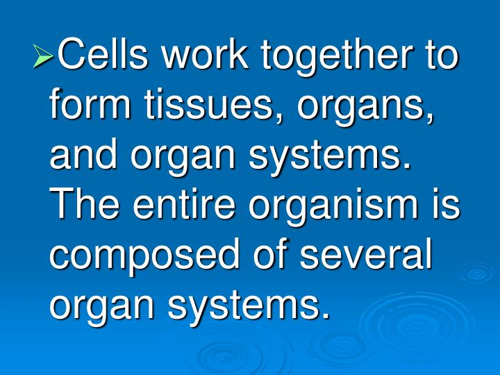 Cells work together to form tissues, organs, and organ systems.  The entire organism is composed of several organ systems.