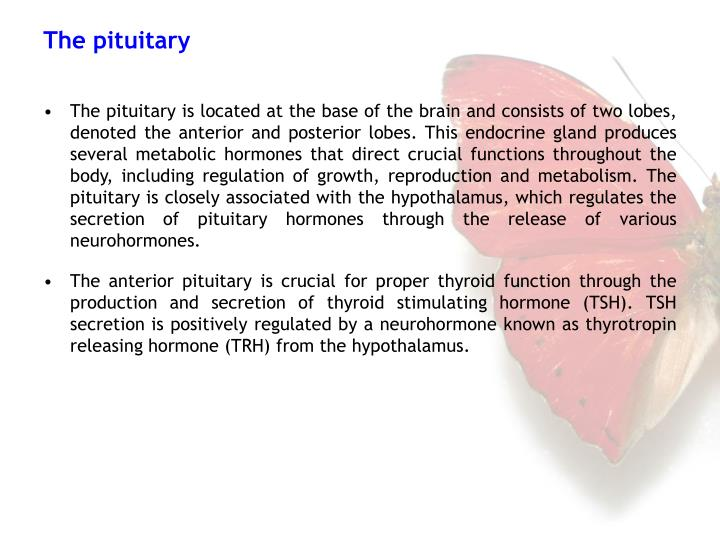 The pituitary is located at the base of the brain and consists of two lobes, denoted the anterior and posterior lobes. This endocrine gland produces several metabolic hormones that direct crucial functions throughout the body, including regulation of growth, reproduction and metabolism. The pituitary is closely associated with the hypothalamus, which regulates the secretion of pituitary hormones through the release of various neurohormones.