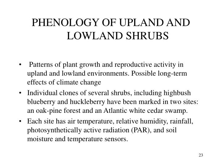 PHENOLOGY OF UPLAND AND
