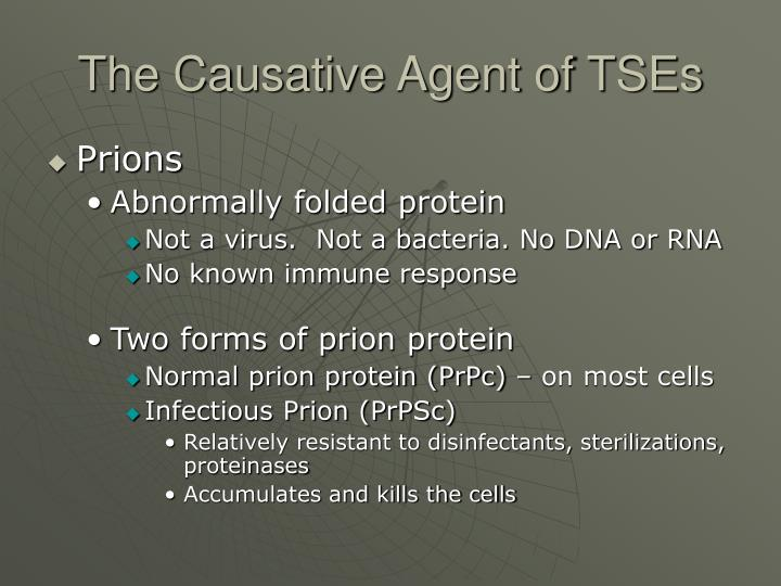 The causative agent of tses