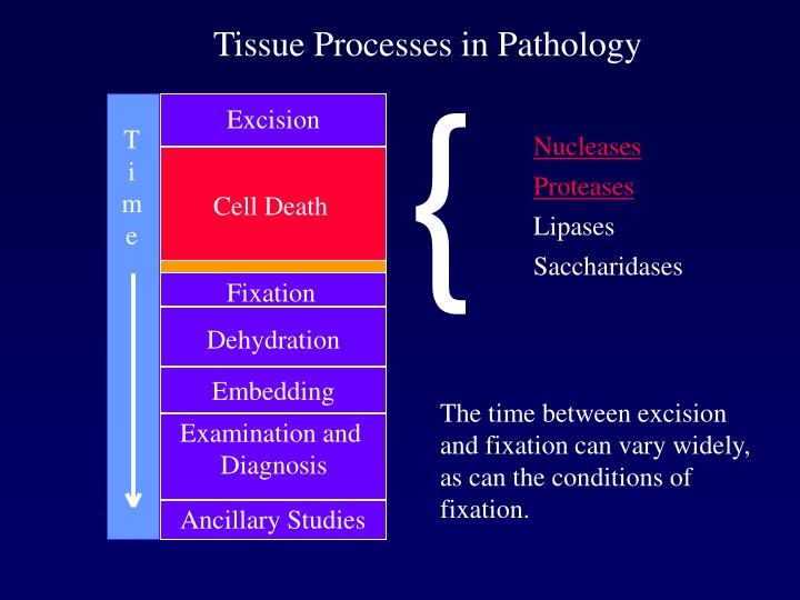 Tissue Processes in Pathology
