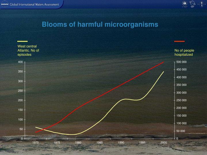 Blooms of harmful microorganisms