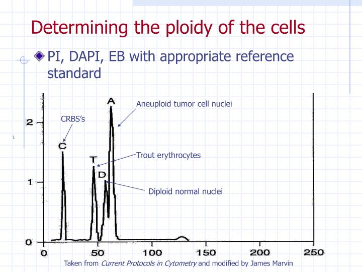 Determining the ploidy of the cells