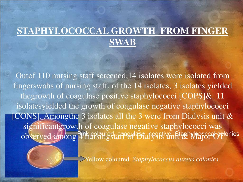 STAPHYLOCOCCAL GROWTH  FROM FINGER  SWAB