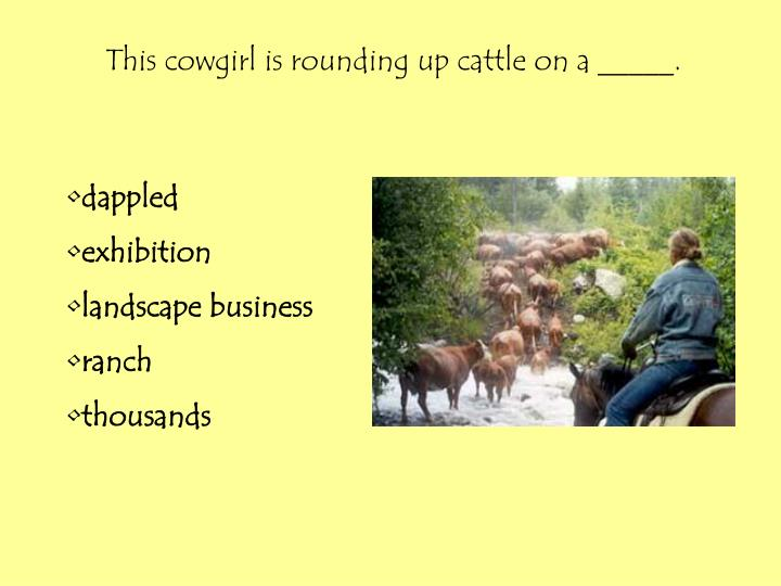 This cowgirl is rounding up cattle on a _____.