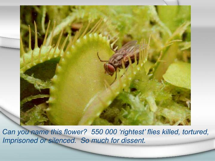 Can you name this flower?  550 000 'rightest' flies killed, tortured,