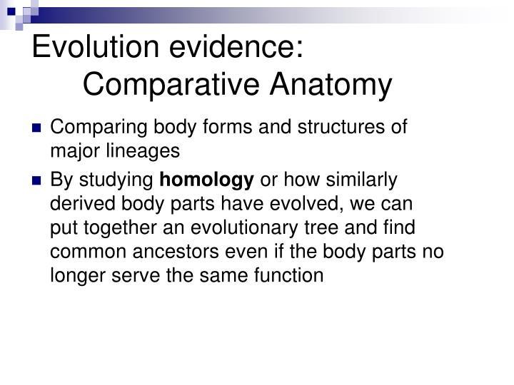 Comparative anatomy evolution