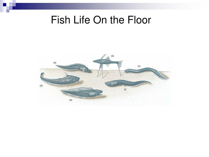 Fish Life On the Floor