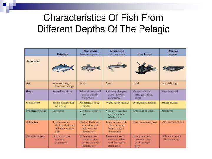 Characteristics Of Fish From Different Depths Of The Pelagic