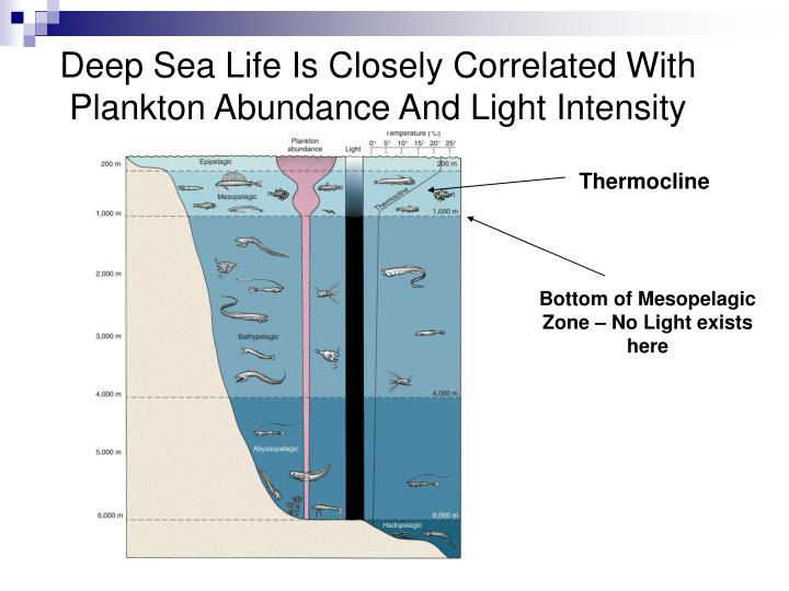 Deep Sea Life Is Closely Correlated With Plankton Abundance And Light Intensity