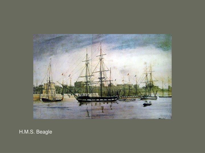 H.M.S. Beagle