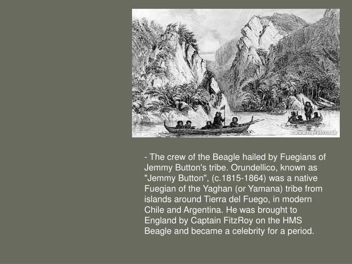 """-The crew of the Beagle hailed by Fuegians of Jemmy Button's tribe. Orundellico, known as """"Jemmy Button"""", (c.1815-1864) was a native Fuegian of the Yaghan (or Yamana) tribe from islands around Tierra del Fuego, in modern Chile and Argentina. He was brought to England by Captain FitzRoy on the HMS Beagle and became a celebrity for a period."""