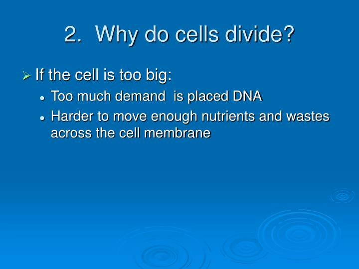 2.  Why do cells divide?