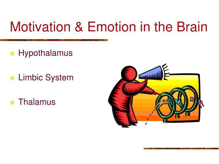 Motivation & Emotion in the Brain