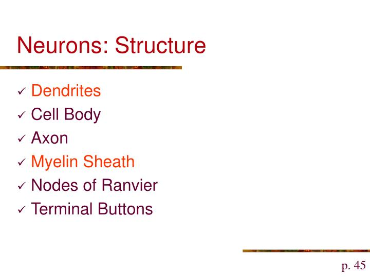 Neurons: Structure