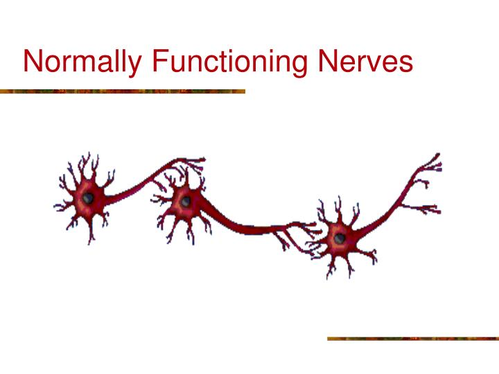Normally Functioning Nerves